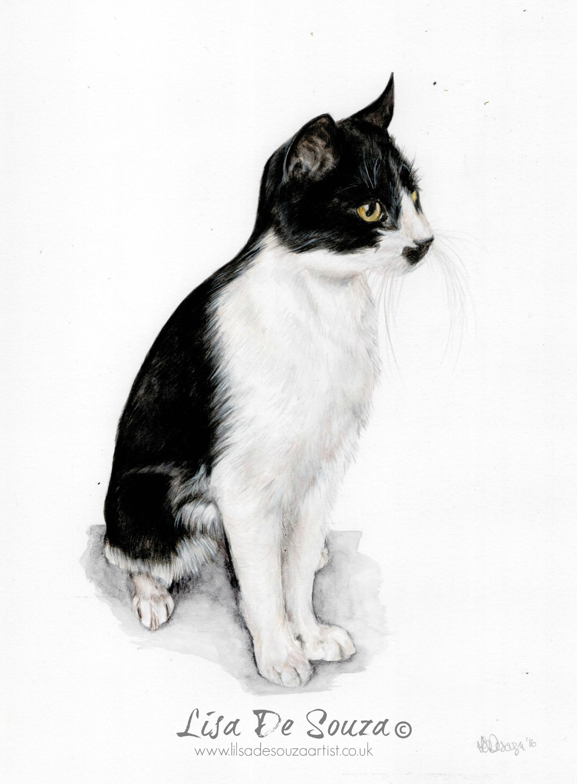 CAT:WM